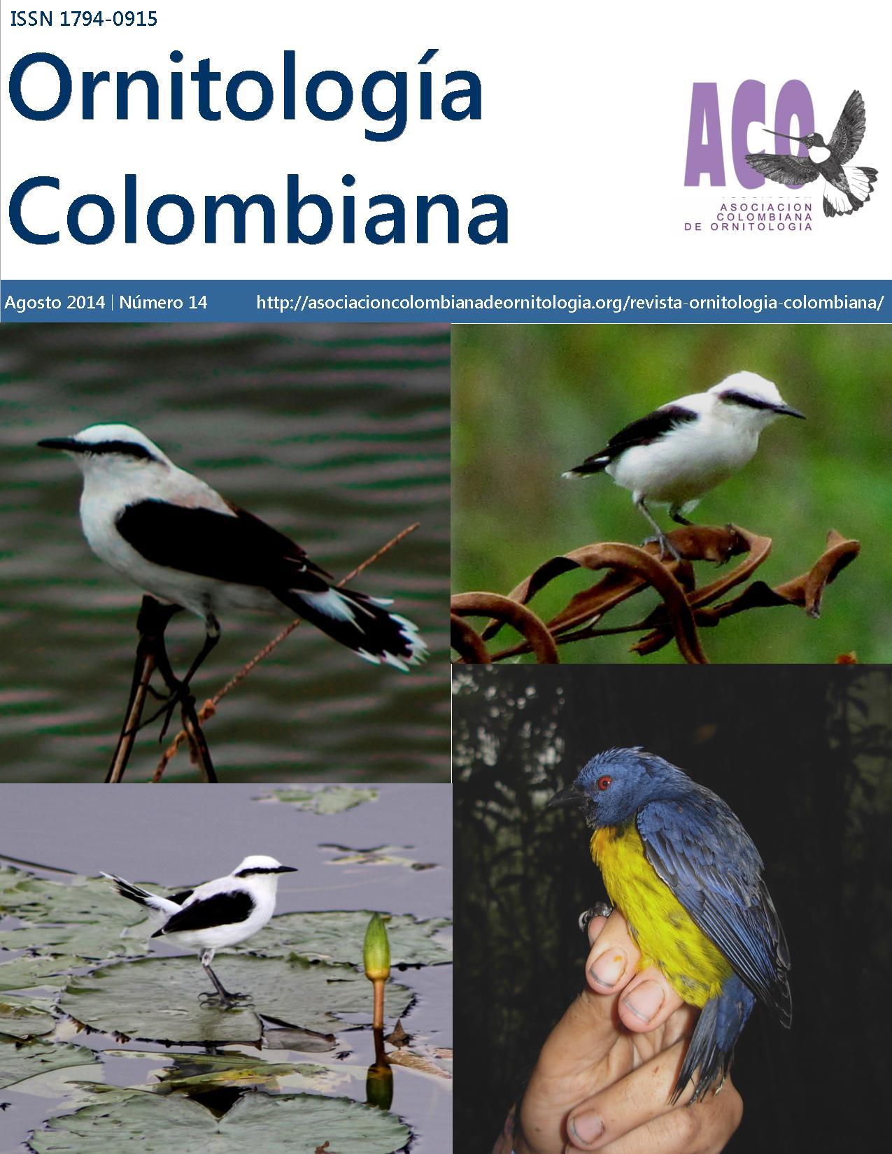 portada-revista-OC14