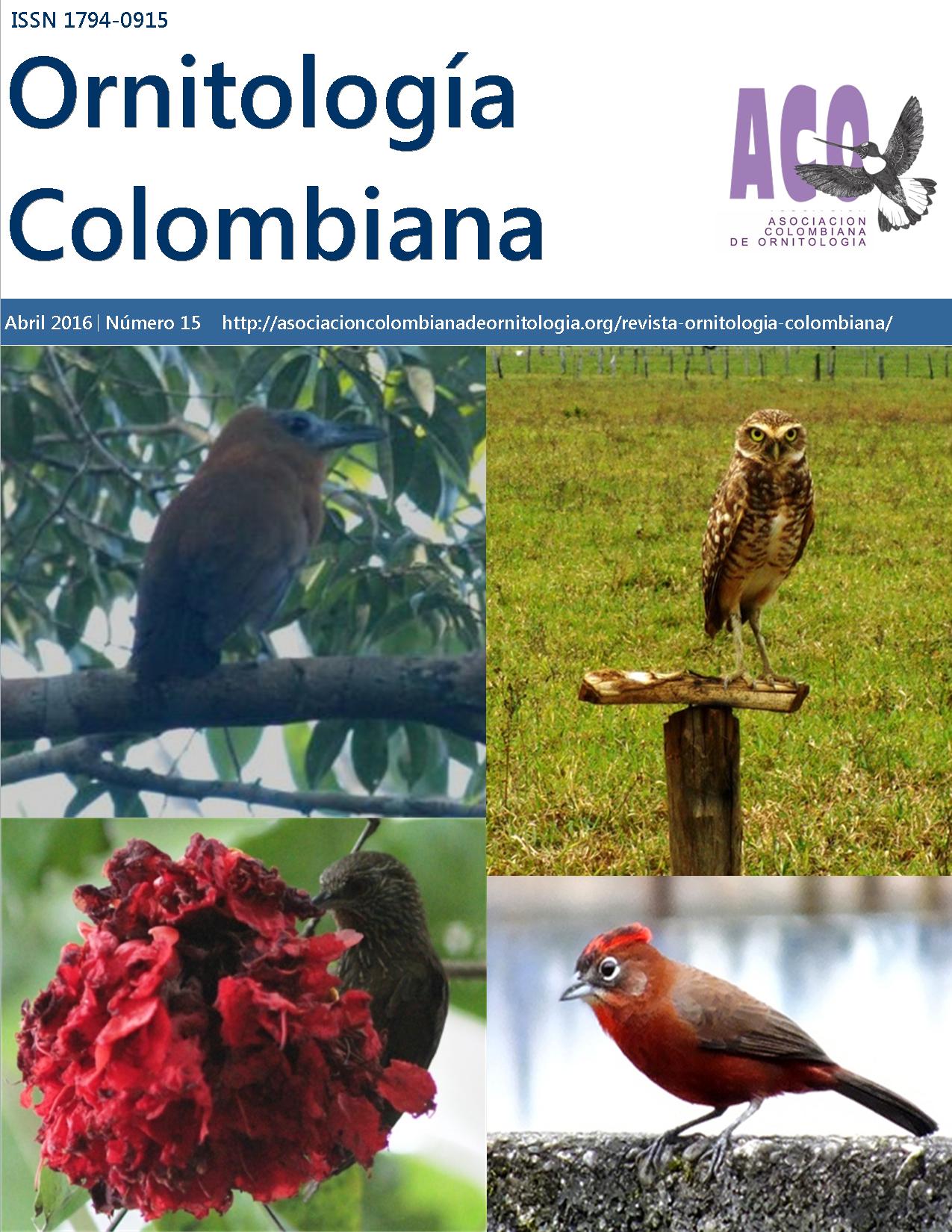 portada-revista-OC15