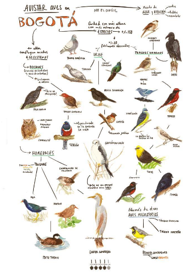 Póster aves de Bogotá